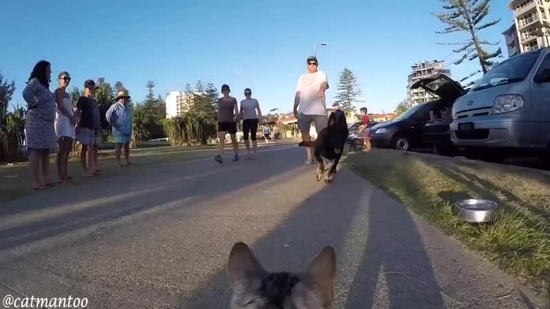 Кот-инспектор на выставке собак