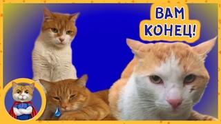 Рыжик Печенька и Неспасенный кот ! Будет ли драка?