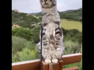До чего же любопытный котейка, скоро очеловечится совсем 😂