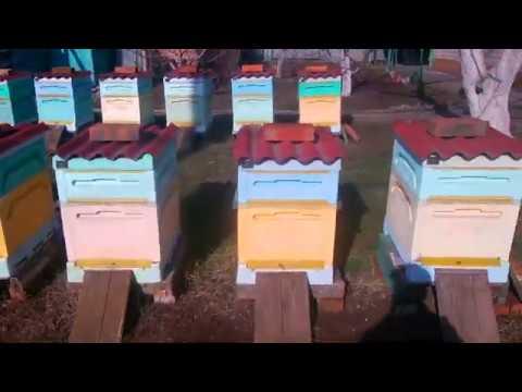 Раздаем медовые лепешки 2020г