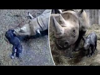 Black Rhinoceros Calf is Born at Cincinnati Zoo & Super cute kittens Worlds most Cute Kittens Part 4
