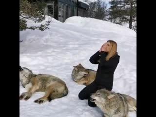 Зов волков