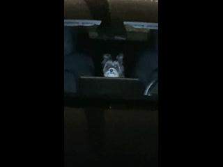 Pupper is watching it's favorite tv show