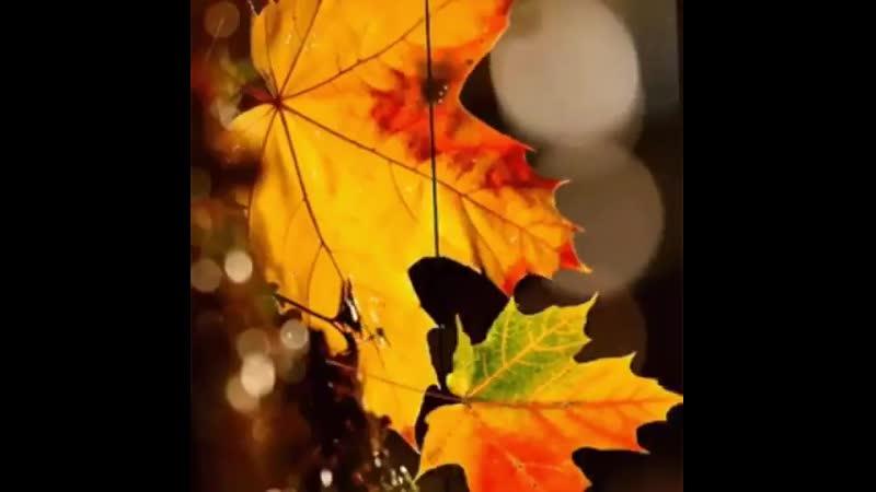 Сентябрь не отводи твоё крыло твоё крыло оранжевого цвета Отсрочь твоё последнее число и подари мне промедленье это