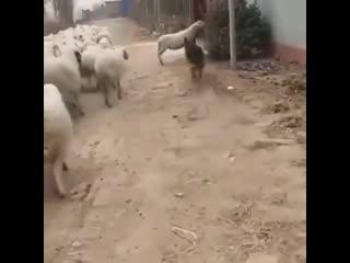 Стой, ты куда, а ну на место!