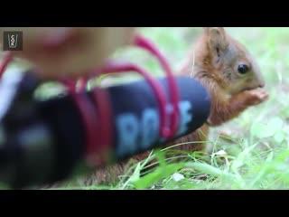 Зоолог Дэни Коннор сняла на видео чавкающего бельчонка
