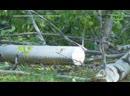 Дерево срубили но на этот раз никто не возмущался