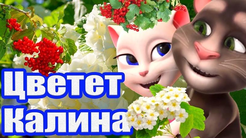 Цветет Калина Так Мило и с Любовью что Просто нет Слов Анжела и Томик