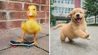 AWW Animals So Cute Cute Baby Animals Videos Compilation 2021 | Cutest Puppies Doing Cute Things