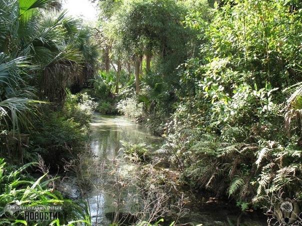 Странные существа в заповеднике Окала Загадочные человекоподобные существа обитают в живописном заповеднике в штате Флорида и время от времени показываются людям. Заповедник Окала в американском