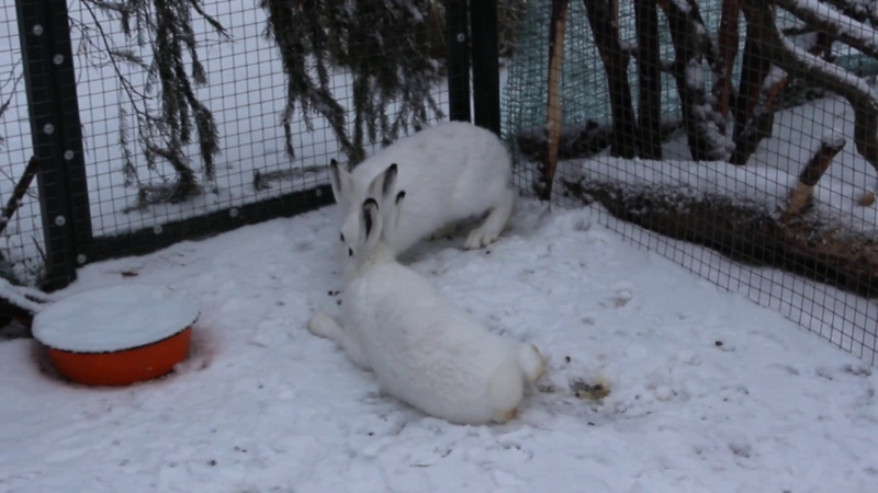 Фрося зовёт играть! Игры в снегу.