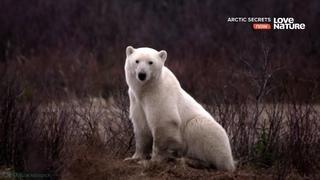 «Тайны Арктики (8). В ожидании зимы» (Познавательный, природа, животные, 2017)