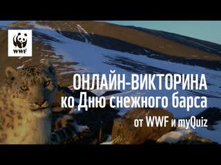 День снежного барса: онлайн-викторина от WWF и myQuiz