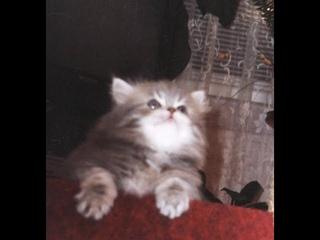 Fluffy kittens balls.