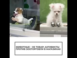 Животные — не товар