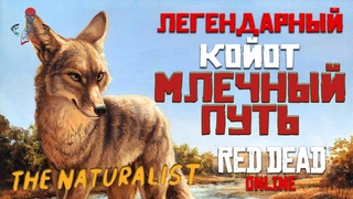 Red Dead Online (RDR Online) - Легендарные животные / Койот Млечный Путь / Усыпить и взять образец