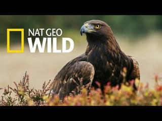Nat Geo Wild: Дикая природа Великобритании