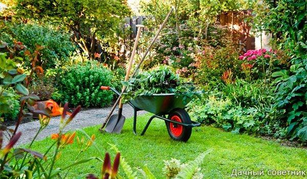Маленькие хитрости опытного садовода