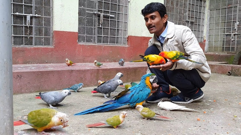 Journey Of Bird Breeding Farm To The Act Of Benevolence Enjoying With Exotic Birds