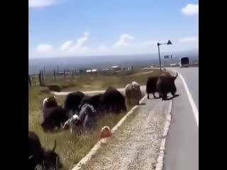 Безопасность на дороге это главное!