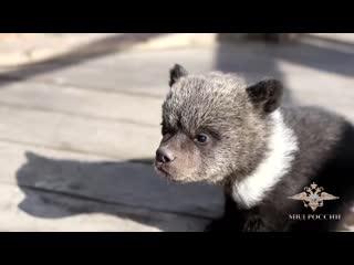 В Улан-Удэ полицейские изъяли у местного жителя медвежат