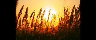 Matt Darey & Aeron Aether feat. Ridgewalkers - Chasing The Sun (Original Mix)