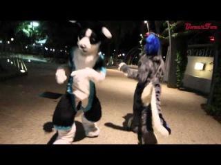 Central Brisbane Fur Meet - Highlights Take 2