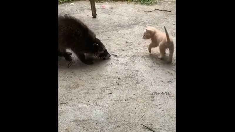 Лучшая охрана двора)