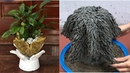Unique With Potted Plants Made From Cement And Foot Rag .( Beautiful And Easy)