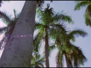 Dance With The Dead - Only A Dream (Miami Vice 1984–1990 Tribute)