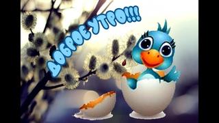 Доброе весеннее утро!!! Слайд шоу с добрым утром! Утренние добрые пожелания!