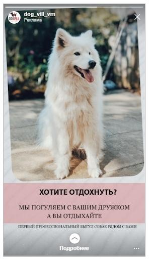 Кейс: продвижение стартапа по выгулу собак, изображение №10