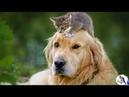 В зубах СОБАКИ вечно гонявшей соседских котов, болтался маленький серенький КОТЕНОК...