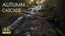 4K HDR Autumn Cascade - Waterfall Sounds -White Water - Relaxing Forest Ambiance Video