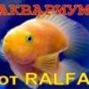 АКВАРИУМ от RALFA