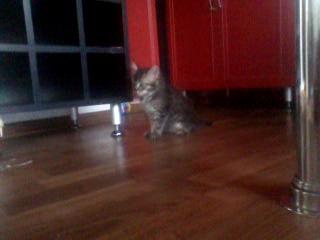 Мишины котята:3