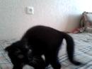 Моя бешеная котятя