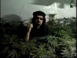Высший пилотаж по выращиванию марихуаны скачать конопля смотреть фото