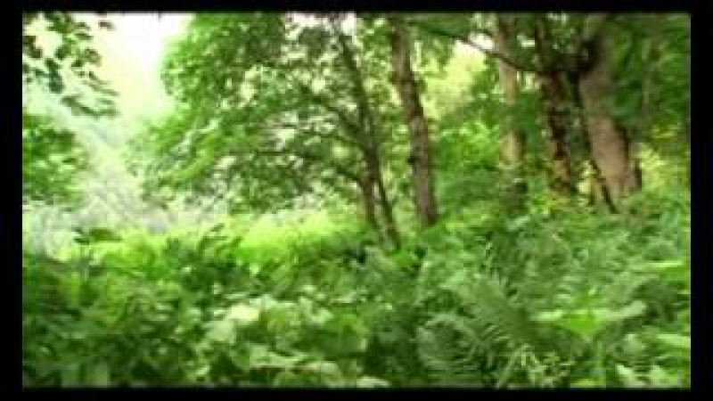 Documented films Lagodekhi protected areal ლაგოდეხის ნაკრძალი