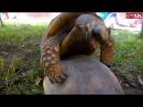 Секс черепах
