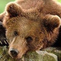 Homosexuální medvěd připojit aplikace