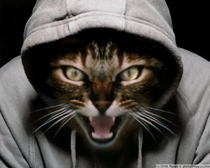статуя фотки котиков на аву в скайпе для пацанов может быть маленькой