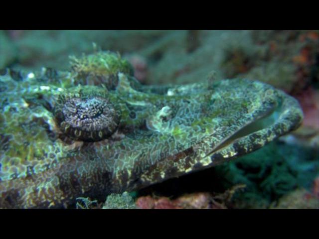 Bunaken Manado - Underwater Video - May 2015