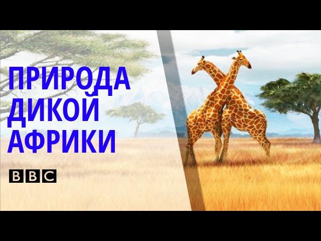✪ Поразительный Документальный фильм BBC о природе и животных дикой Африки BBC на русском