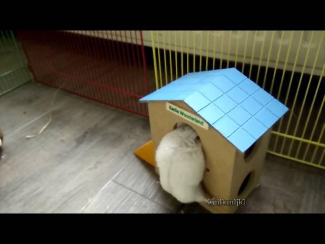 Slomo hamsters set to dramatic music