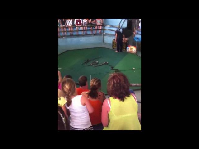Змеи в Тайланде Шоу которое нужно посмотреть