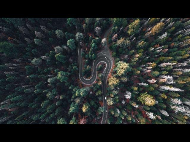 Национальный парк Секвойя. Кингс-Каньон. Самое большое дерево в мире.