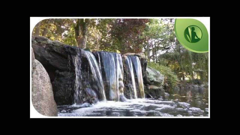 💭 Música para Sonhar 🍃 Inspiração e Prosperidade 🍂 Sons da Natureza para Relaxar