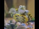 Черепаха-аха-аха