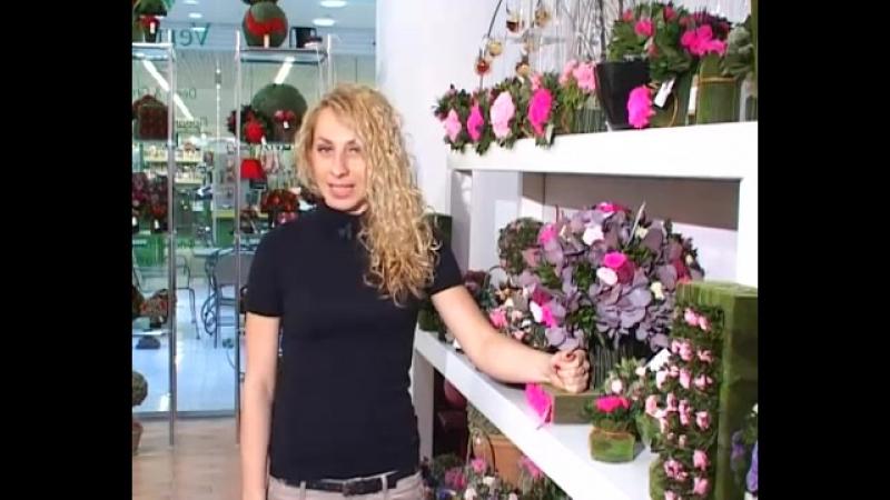 Галерея Вермонт неувядающие цветы